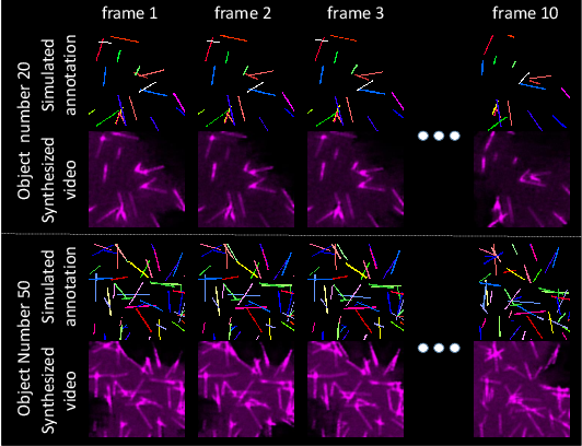 Figure 4 for ASIST: Annotation-free synthetic instance segmentation and tracking for microscope video analysis