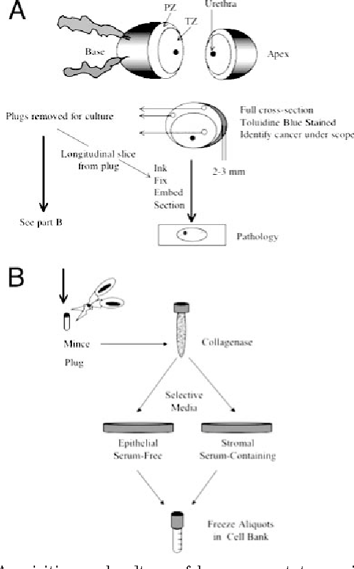 Figure 1 From Are Times A Changin In Carcinogenesis