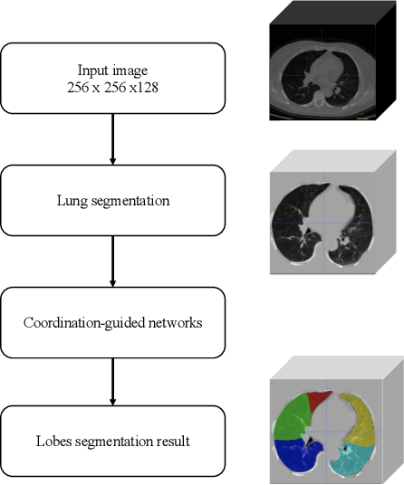 Figure 1 for Automated Segmentation of Pulmonary Lobes using Coordination-Guided Deep Neural Networks