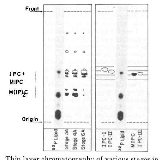 Figure 3 from Inositol phosphorylceramide, a novel substance and the