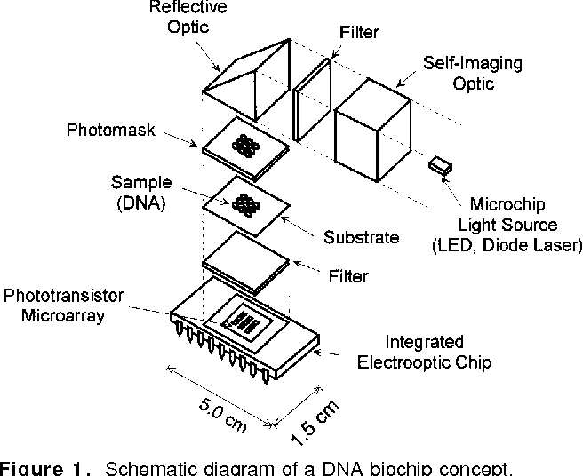 Figure 1 From Dna Biochip Using A Phototransistor Integrated Circuit