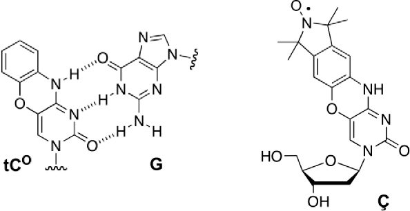 Figure 4 From Nitroxides And Nucleic Acids Chemistry And Electron