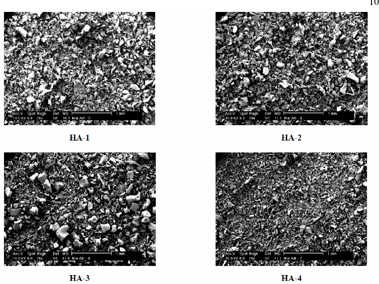 Fig. 2. SEM micrographs of freeze-dried HA (magnification level of 25 ×).
