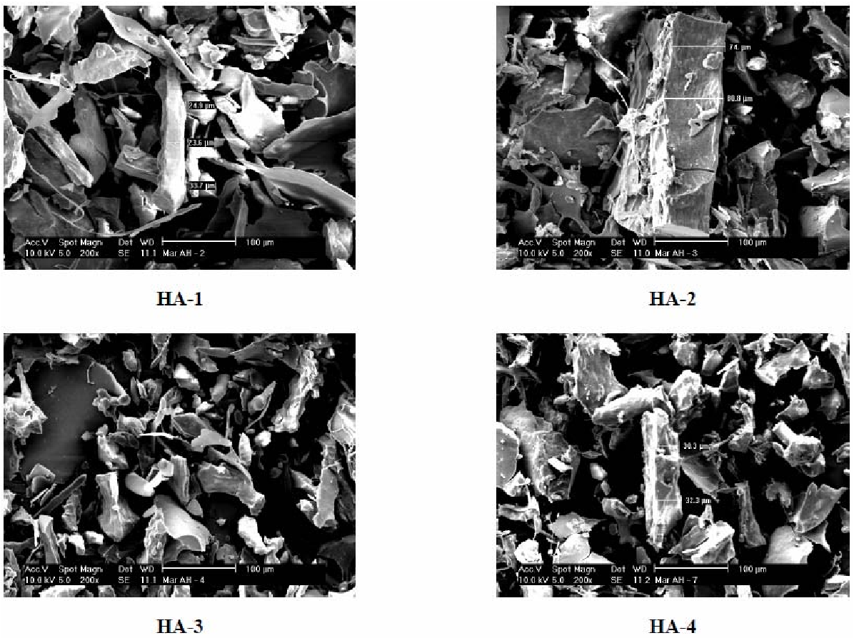 Fig. 3. SEM micrographs of freeze-dried HA (magnification level of 200 ×).