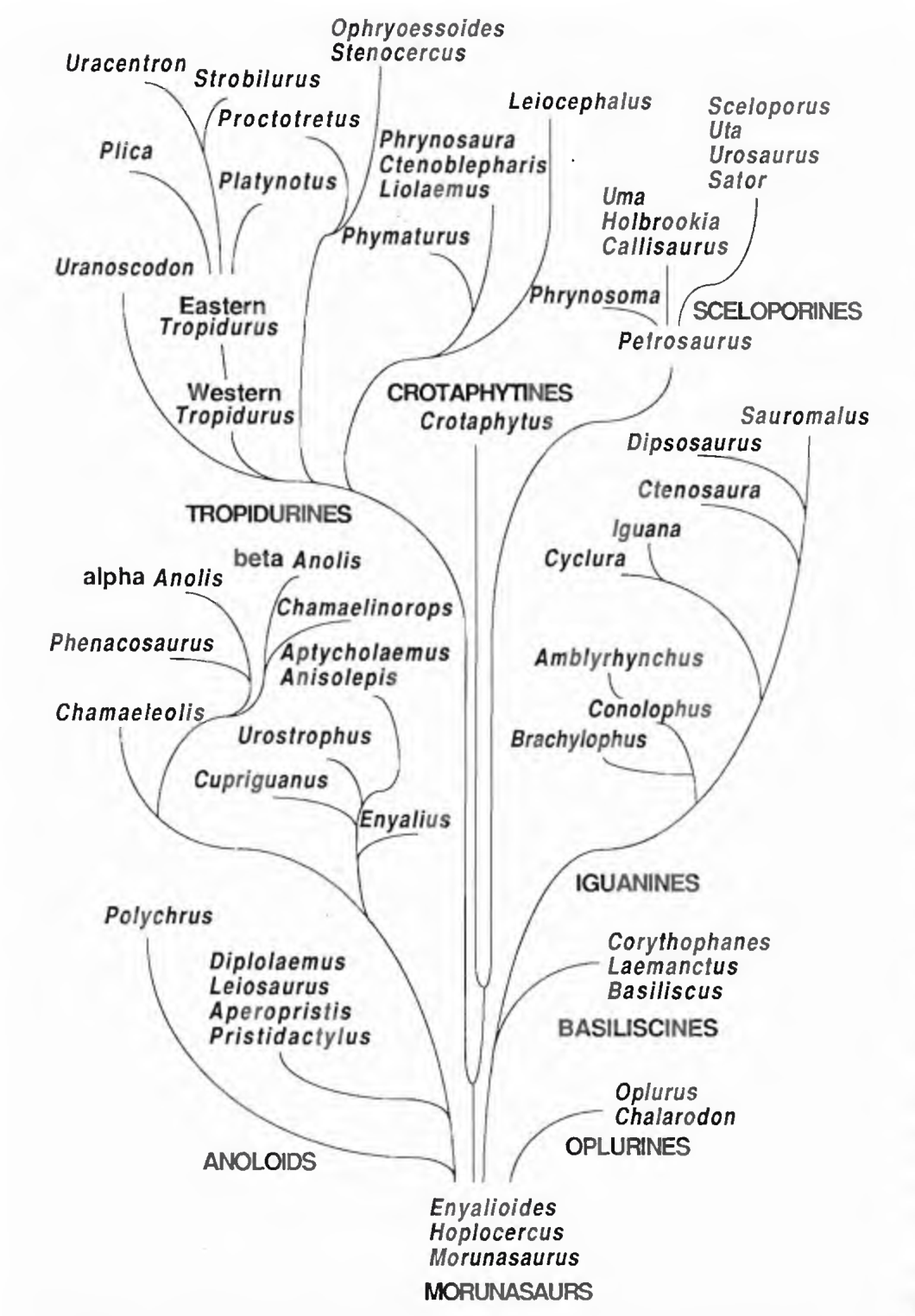 phylogenetics research papers Phylogeny research paper until recently, porifera had been considered a phylum but new evidence suggests that it is a clade a clade represents organisms that have a common ancestor and members of the clade may both be extant or extinct.