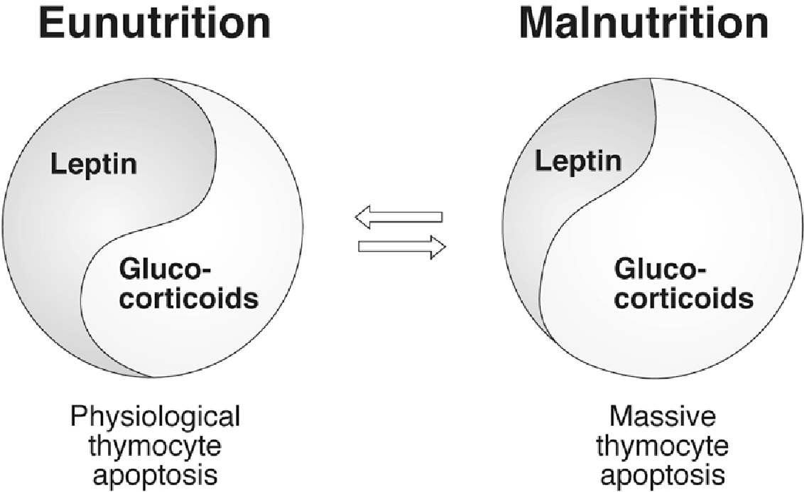 The Thymus Gland Is A Target In Malnutrition Semantic Scholar
