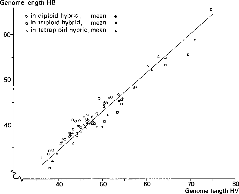 Fig. 5. The relation between the genome lengths of 1t. vulgare (HV) and H. bulbosum (HB) as measured in the diploid, triploid and tetraploid hybrids (in arbitrary units). Coefficient of regression, 0.864 + 0.034.