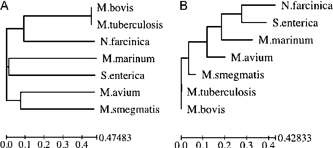 Figure 1 From Evidence For Mycobacteria In Sarcoidosis Semantic