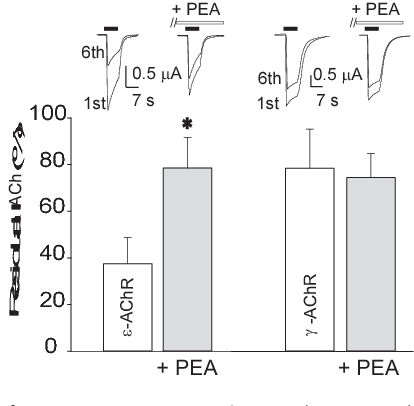 Acetylcholine receptors from human muscle as pharmacological