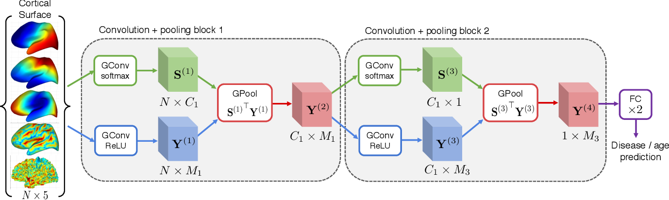 Figure 2 for Learnable Pooling in Graph Convolution Networks for Brain Surface Analysis