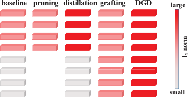 Figure 1 for DGD: Densifying the Knowledge of Neural Networks with Filter Grafting and Knowledge Distillation