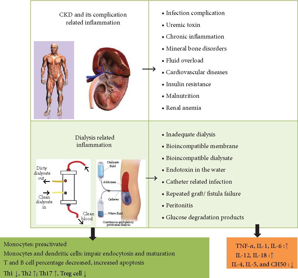 PDF] Vitamin D and the Immune System from the Nephrologist's