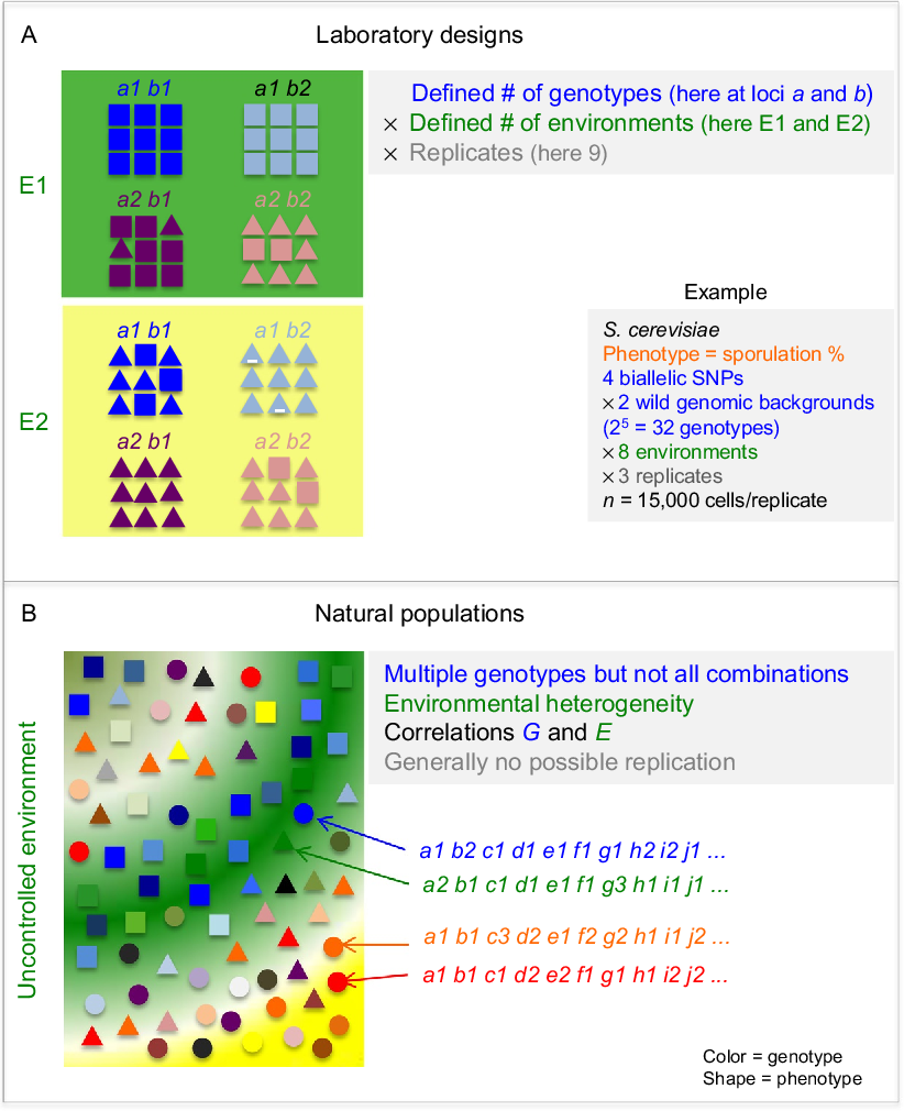 Phenotypic Evolution With and Beyond Genome Evolution
