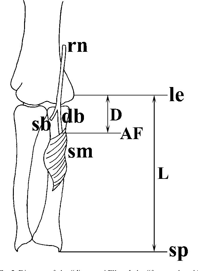 Großzügig Körpermuskeltabelle Bilder - Anatomie Von Menschlichen ...