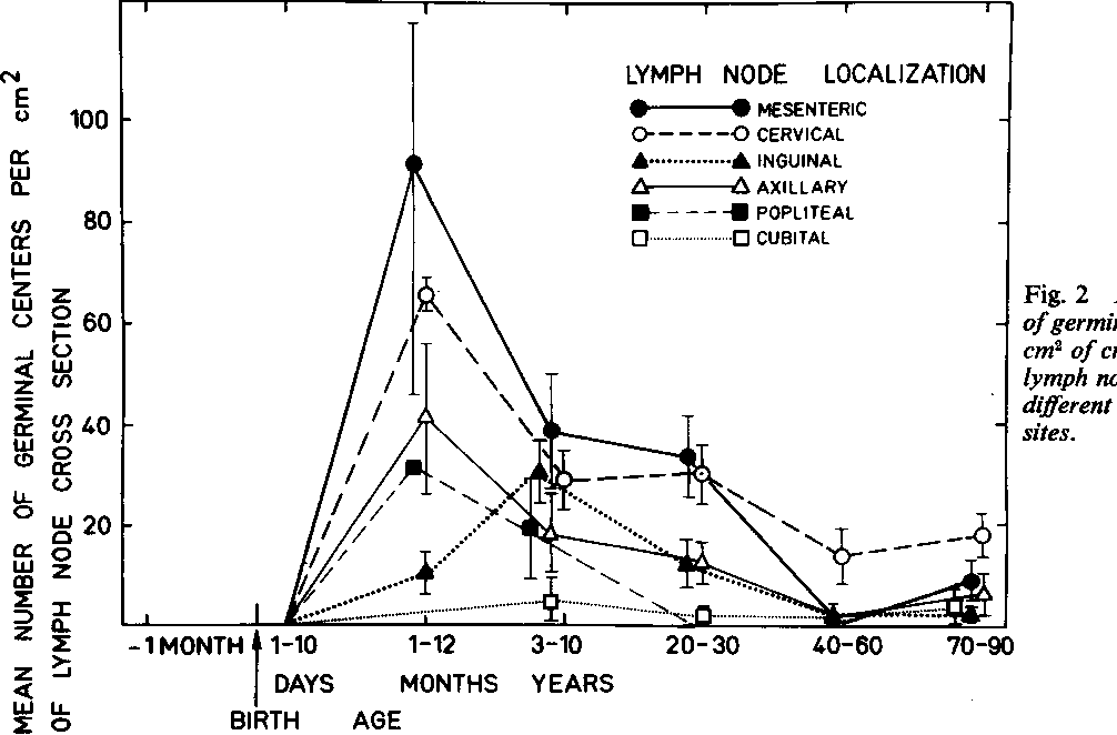 Human Lymph Node Morphology As A Function Of Age And Site