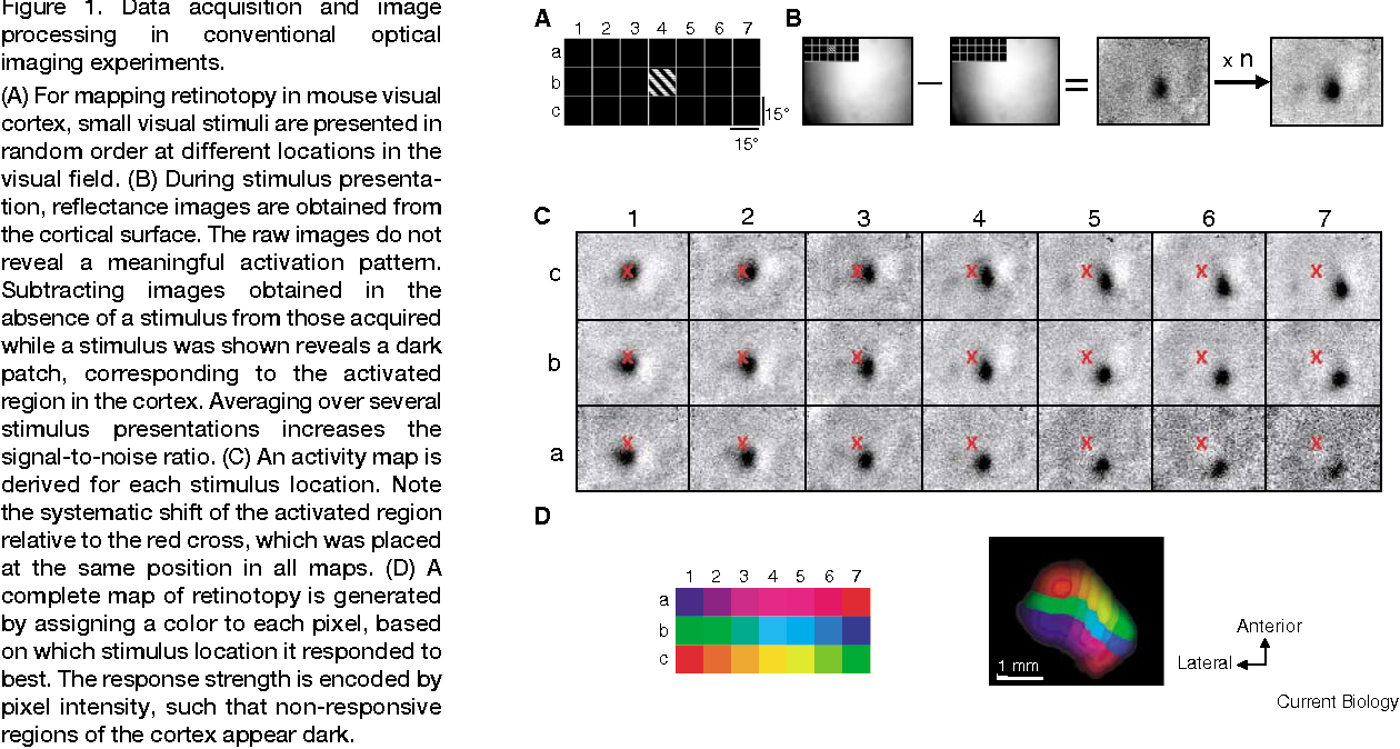 Figure 1. Data acquisition and image processing in conventional optical imaging experiments.