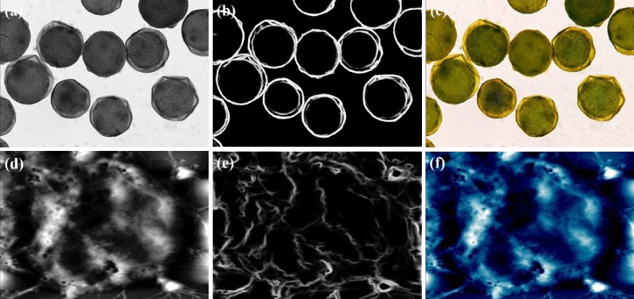 Figure 3 for Nanoscale Microscopy Images Colourisation Using Neural Networks