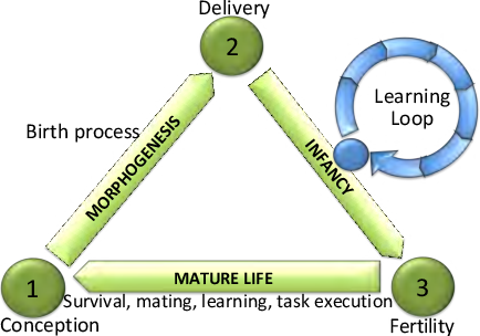 Figure 1 for Learning Directed Locomotion in Modular Robots with Evolvable Morphologies
