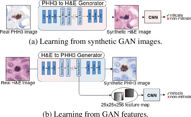 Figure 2 for Virtual staining for mitosis detection in Breast Histopathology