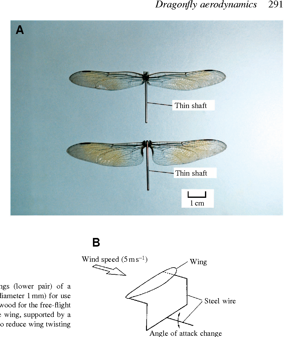 Aerodynamic characteristics of the wings and body of a dragonfly ...