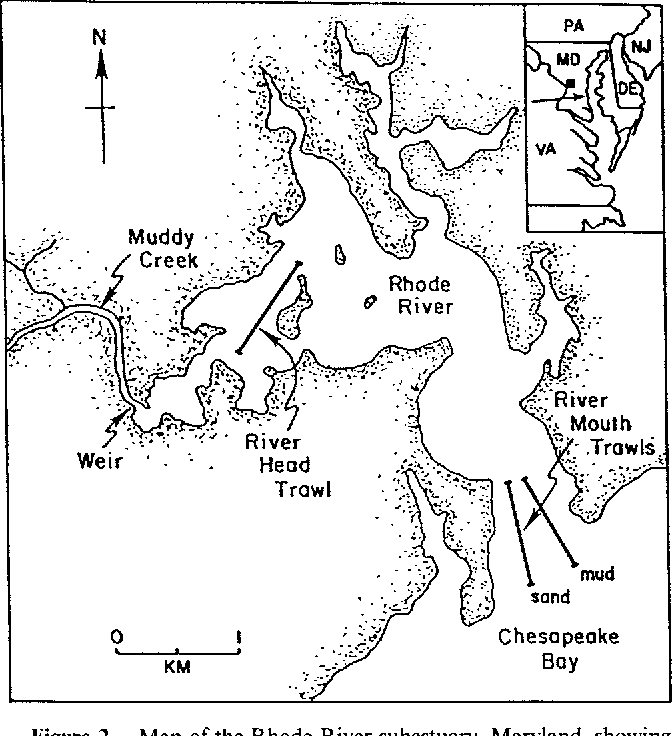 Figure 2 From Autotomy In Blue Crab Callinectes Sapidus Rathbun