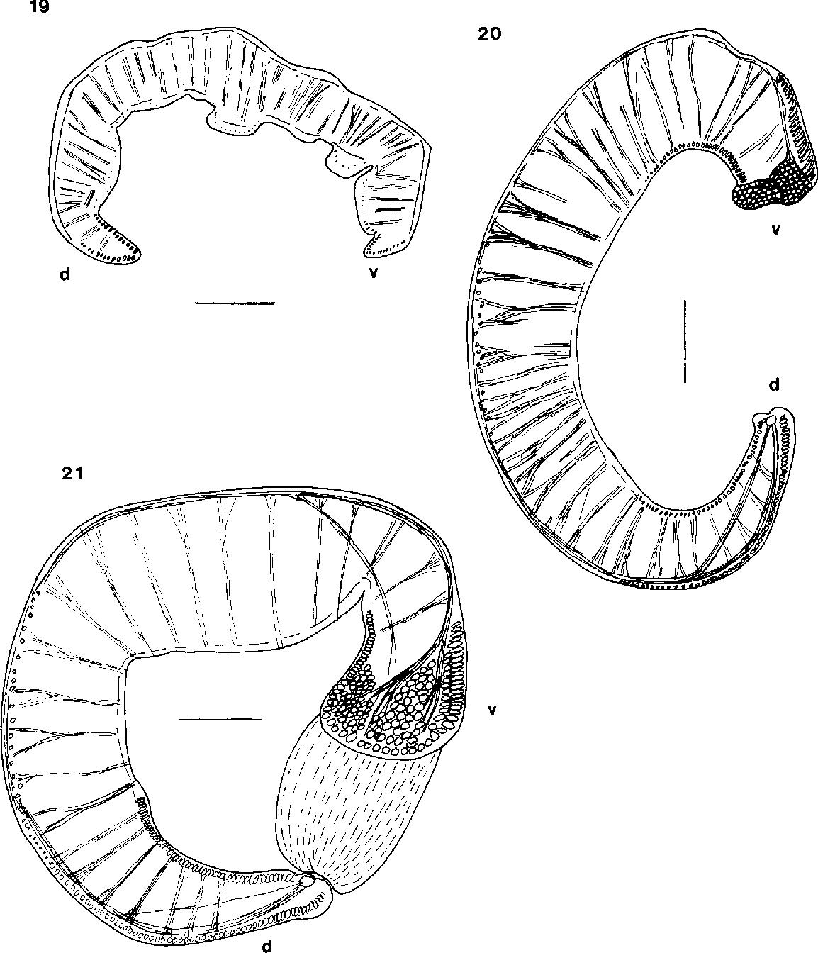 figure 19-21