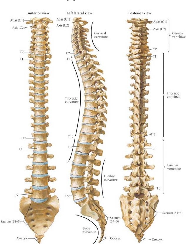 Study of stress and strain in human spine - Semantic Scholar