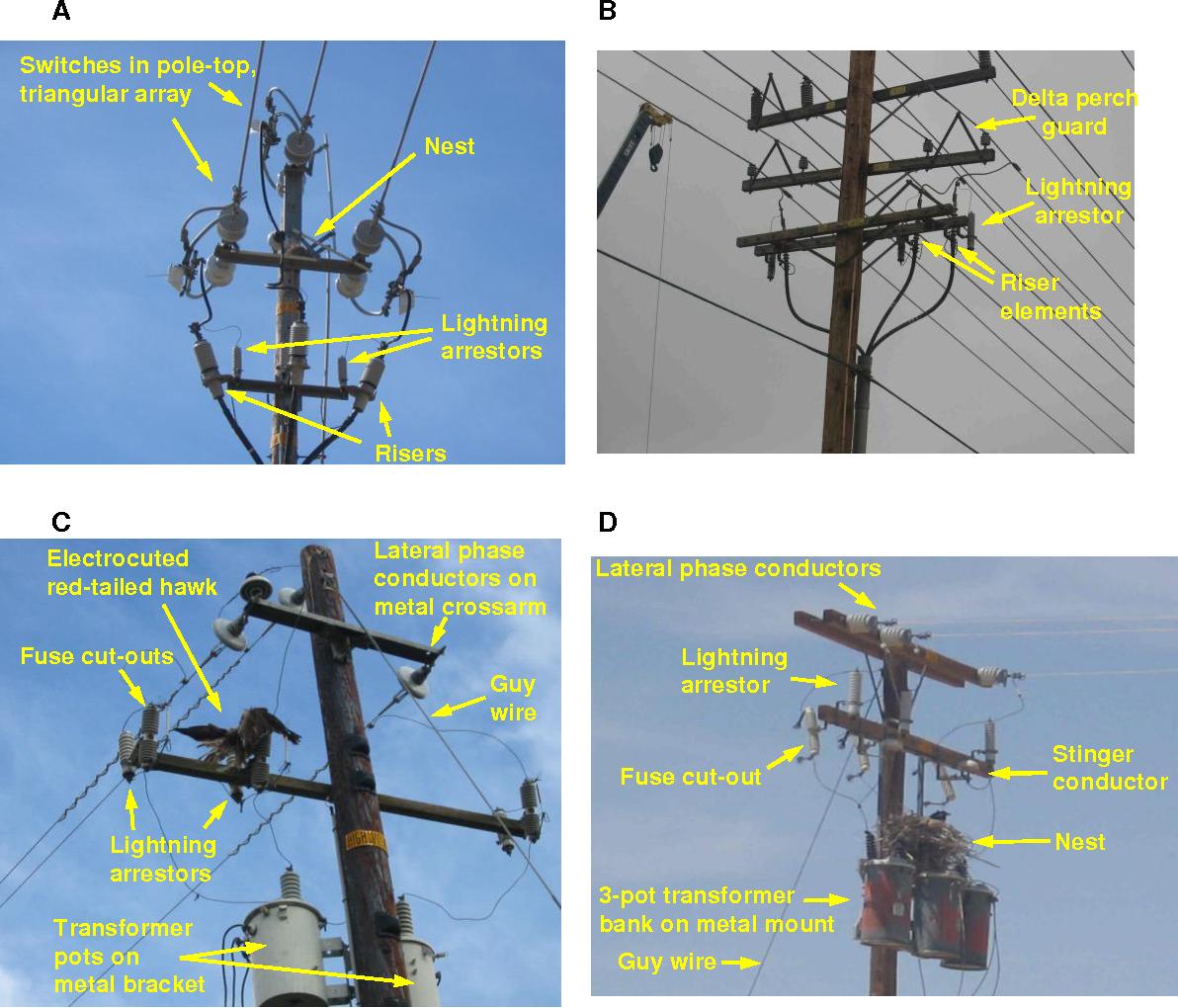 Utility Pole Wire Identification