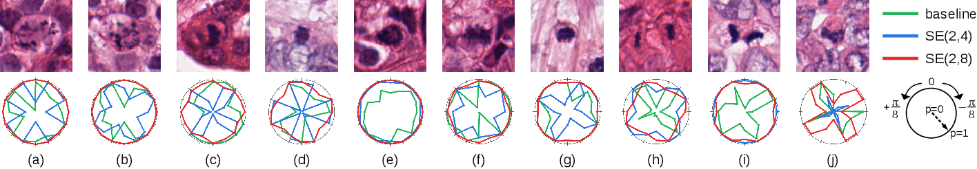 Figure 4 for Roto-Translation Equivariant Convolutional Networks: Application to Histopathology Image Analysis