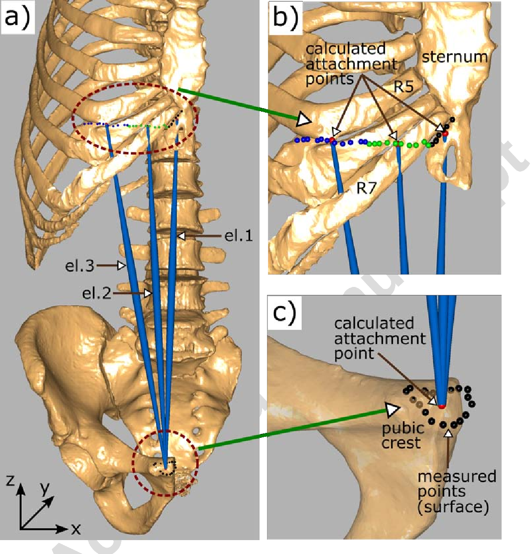 Figure 2 from Twente spine model: A complete and coherent