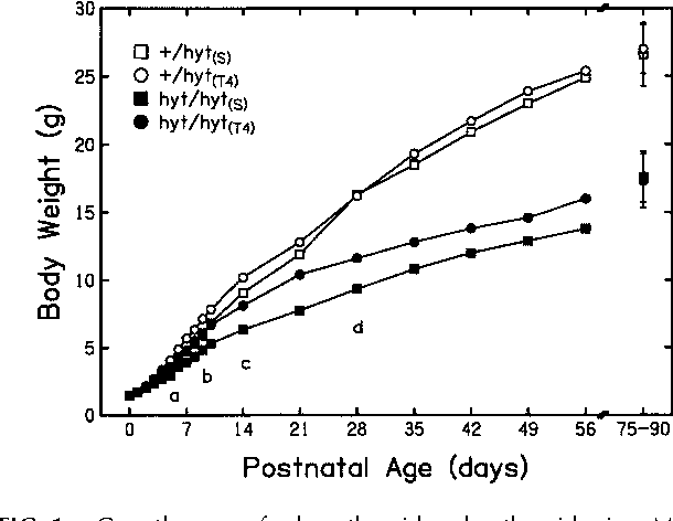 "FIG. 1. Growth curves for hypothyroid and euthyroid mice. MeanSerum T4 levels in adult Tshr mutant mice fell into two body weights as a function of postnatal age are shown for each ofdistinct, nonoverlapping populations with mean values the four experimental groups: hypothyroid (hyt/hyt) and euthyroid (1/of 0.15 mg/dL (n 5 10) and 5.72 mg/dL (n 5 12) that hyt) mice given thyroxin (T4) or saline placebo (S) injections (T4 orranged from 0.01 to 0.82 mg/dL and from 4.29 to S indicated in subscripts) from birth through the postnatal day 10. 7.56 mg/dL, respectively. This bimodal distribution is For the sake of clarity, error bars are not shown. Values at the far right are group weights (mean 6 SD) at the time of ABR testing. Eachcharacteristic of Tshr mutant mice (Adams et al. 1989; group contained 10–12 mice. At the age indicated by ""a,"" the weightsStein et al. 1989) and served as the basis for sorting of the 1/hyt(T4) group began to surpass all other groups ( p , 0.05);experimental subjects into hyt/hyt and 1/hyt groups. ""b,"" 1/hyt(S) began to surpass hyt/hyt(S) ( p , 0.01); ""c,"" 1/hyt(T4) noT4 treatment during the perinatal period did not sig- longer surpassed 1/hyt(S); ""d,"" 1/hyt(S) began to surpass hyt/hyt(T4) nificantly alter adult serum T4 levels (Table 1). ( p , 0.01)."