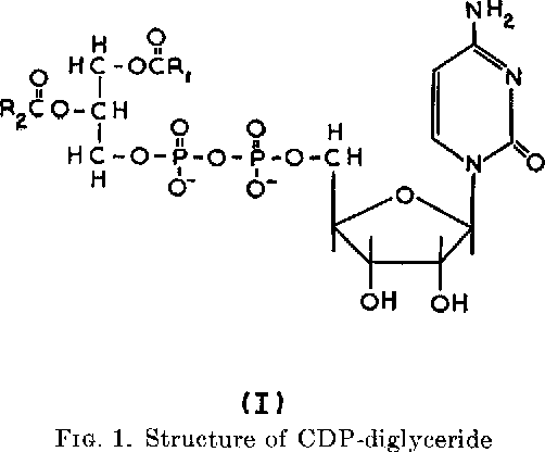 FIG. 1. Structure of CDP-diglyceride