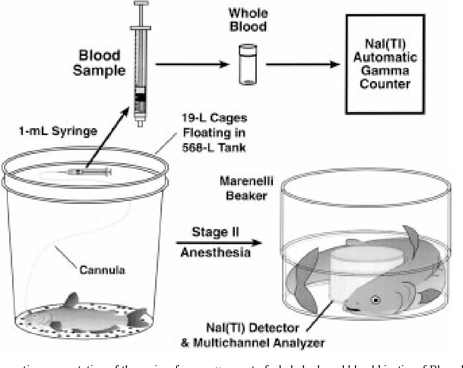 Figure 1 from Rubidium and Cesium Kinetics and Tissue