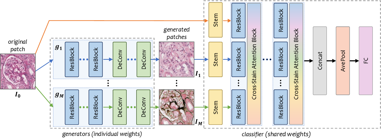 Figure 3 for G2C: A Generator-to-Classifier Framework Integrating Multi-Stained Visual Cues for Pathological Glomerulus Classification