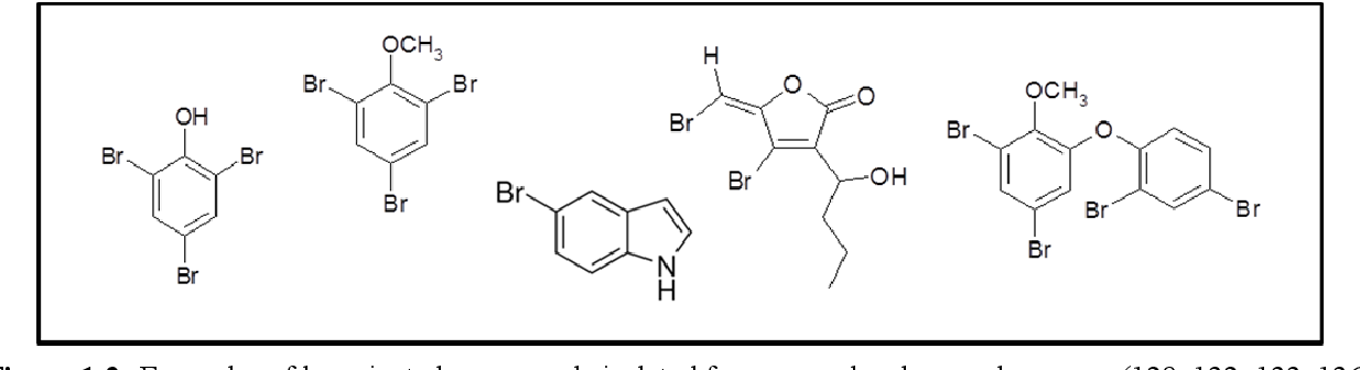 Figure 1-2: Examples of brominated compounds isolated from mussels, algae and sponges (128, 132, 133, 136- 138).