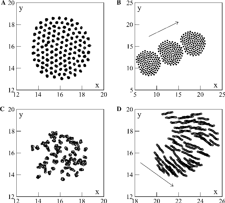 Fig. 6. Structures of condensed phases for a small system of 128 particles, and L = 32. (A) Immobile ''solid'' at a = 1.0 and b = 100.0 (20 timesteps superimposed). (B)''Flying crystal'' at a = 3.0 and b = 100.0 (three snapshots, separated by 120 timesteps). (C) Stationary fluid droplet at a = 1.0 and b = 2.0 (20 consecutive timesteps). (D) Moving droplet at a = 3.0 and b = 3.0 (20 consecutive timesteps). (B and D) The arrow indicates the (instantaneous) direction of motion.
