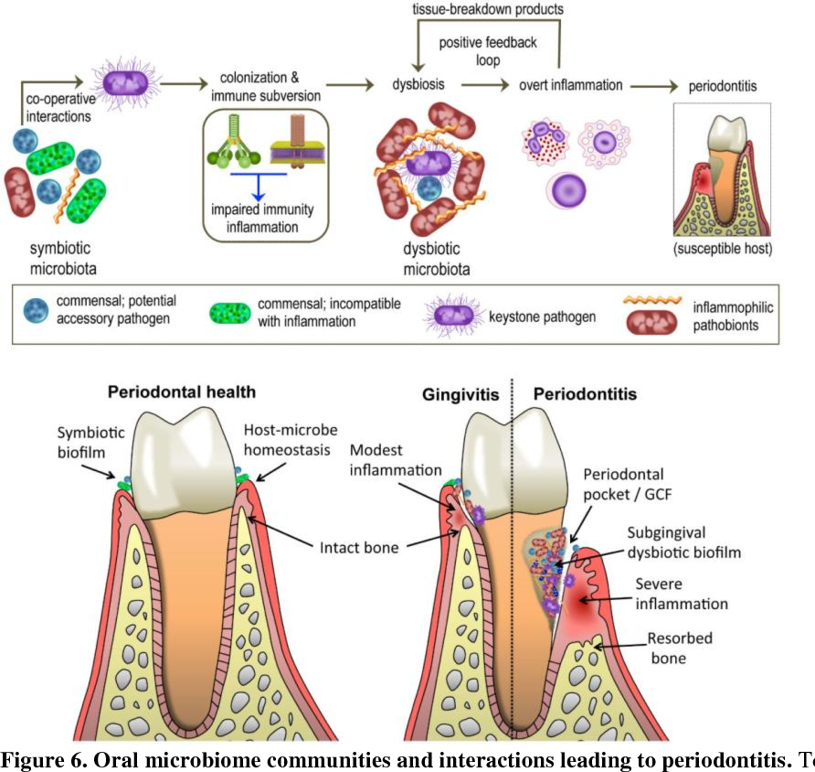 Figure 6 From Got Teeth How The Oral Microbiome And Diet Affects