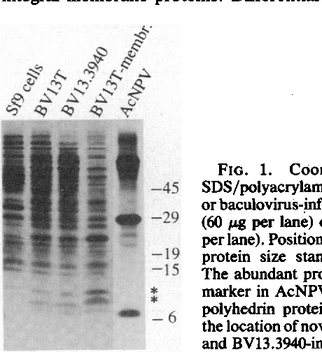 Figure 2 from Baculovirus expression of the maize