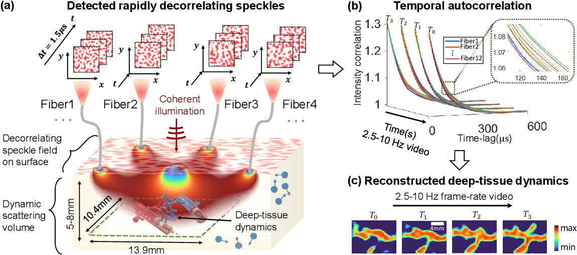 Figure 1 for Imaging dynamics beneath turbid media via parallelized single-photon detection