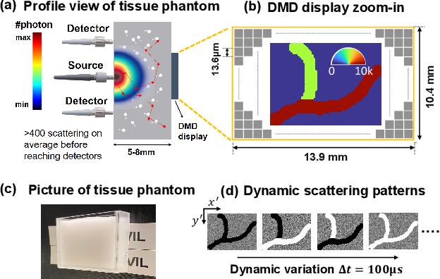 Figure 3 for Imaging dynamics beneath turbid media via parallelized single-photon detection