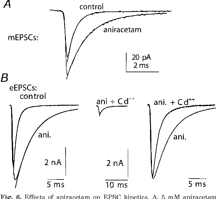 Figure 6 From The Mechanism Of Action Of Aniracetam At Synaptic