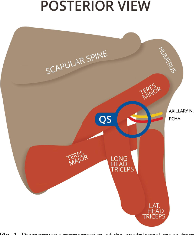 Reproducibility Of The Spi Us Protocol For Ultrasound Diameter