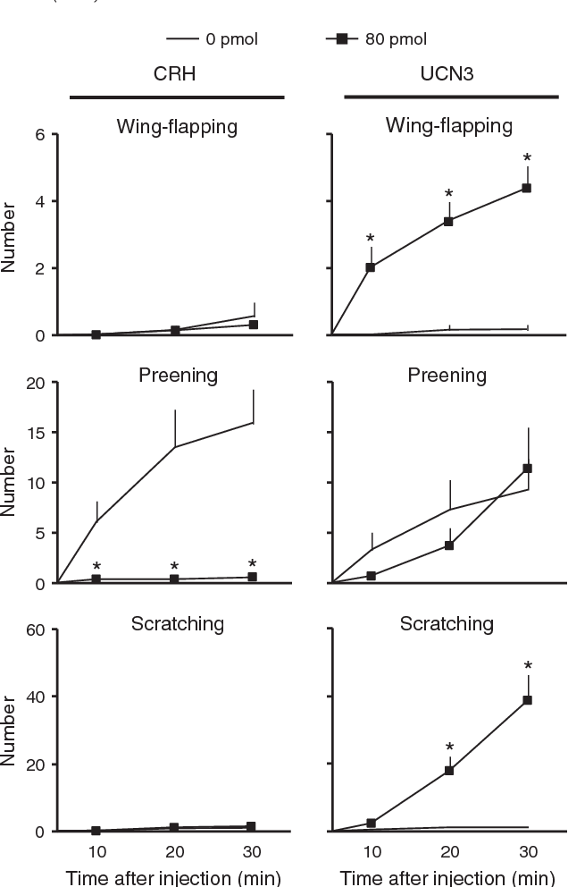 Fig. 5. The number ofwing-flapping, preening and scratching behaviors after ICV injection of CRH and UCN-3 in chicks. Data are cumulative values and are expressed as mean ± SEM. The number of chicks in 0 and 80 pmol CRH group was 7 and 7, and 6 and 8 for those receiving UCN-3, respectively. *Significantly different from 0 pmol group at each time period (P b 0.05).