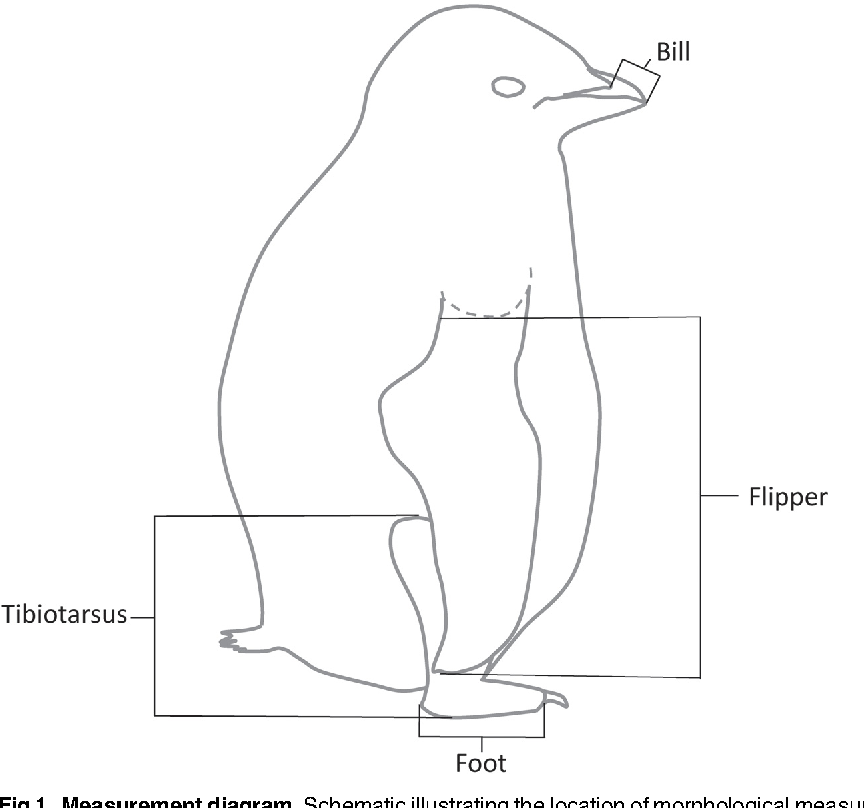 Figure 1 From Sex Based Differences In Adlie Penguin Pygoscelis
