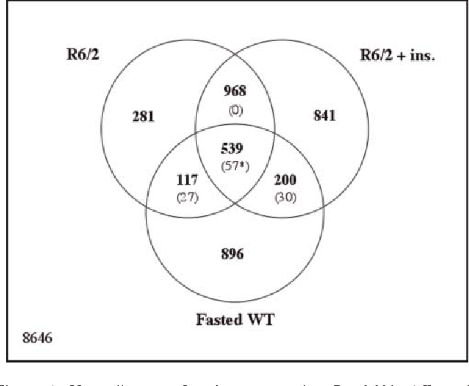 Venn Diagram Of Muscles Types Schematics Wiring Diagrams