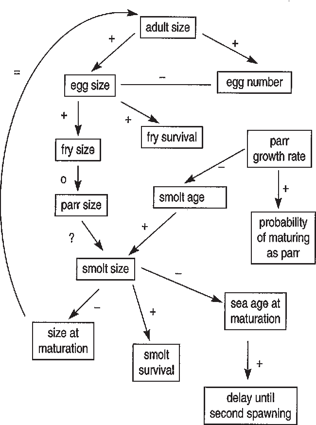 Figure 1 From A Framework For Understanding Atlantic Salmon Salmo