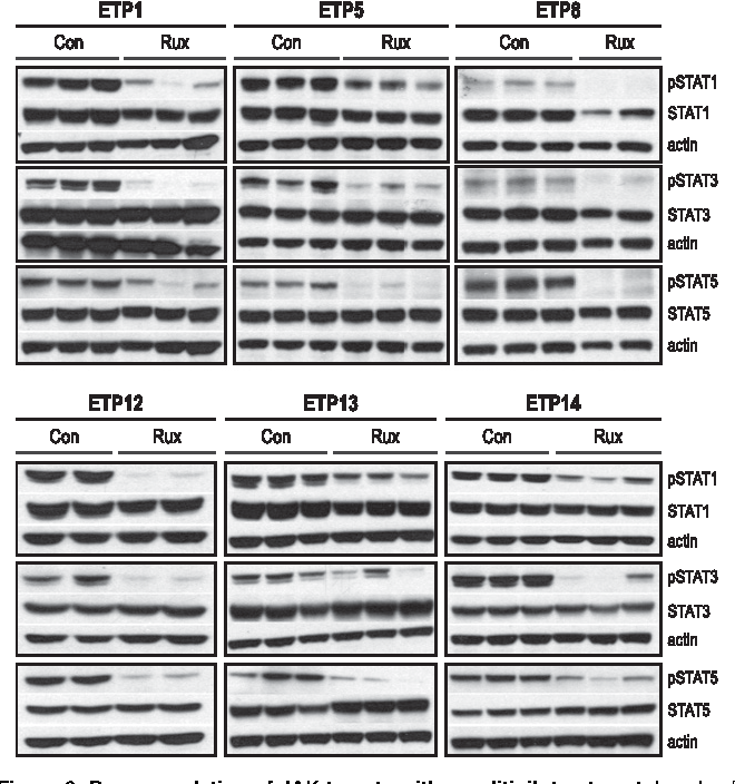 Figure 6. Down-regulation of JAK targets with ruxolitinib treatment. Levels of phosphophorylated (p) and total STAT proteins in the spleens of ETP-ALL xenografts. Xenografts (2-3 mice per arm, replicates shown) were treated with ruxolitinib (rux) or vehicle (con) for 72 hours, spleens were harvested, and protein lysates were subjected to immunoblot. Protein levels by immunoblot of replicates were quantitated relative to actin and analyzed by the Welch-Satterthwaite t test. Levels of pSTAT1 were reduced by .50% in treated mice compared with control for all 6 samples (P , .05). There was a .50% reduction in pSTAT3, which was statistically significant (P , .05) for ETP1, 5, 8, and 14 but not significant for ETP12 and 13. There was a 70% or greater reduction in pSTAT5 for all 6 samples (P , .05).