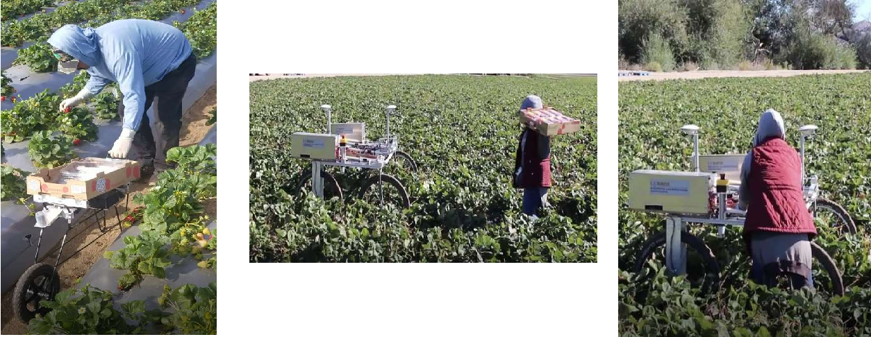 Figure 2 for A strawberry harvest-aiding system with crop-transport co-robots: Design, development, and field evaluation