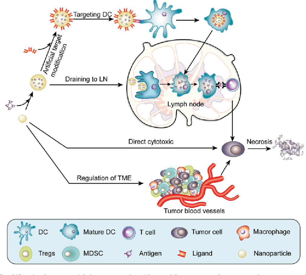 PDF] Application of multifunctional nanomaterials in cancer vaccines