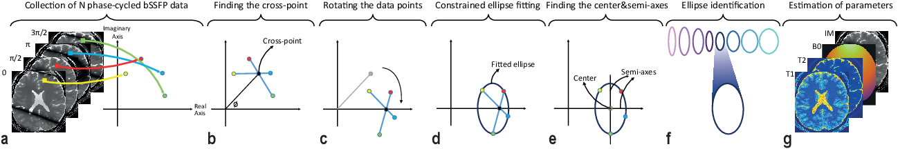 Figure 3 for Constrained Ellipse Fitting for Efficient Parameter Mapping with Phase-cycled bSSFP MRI